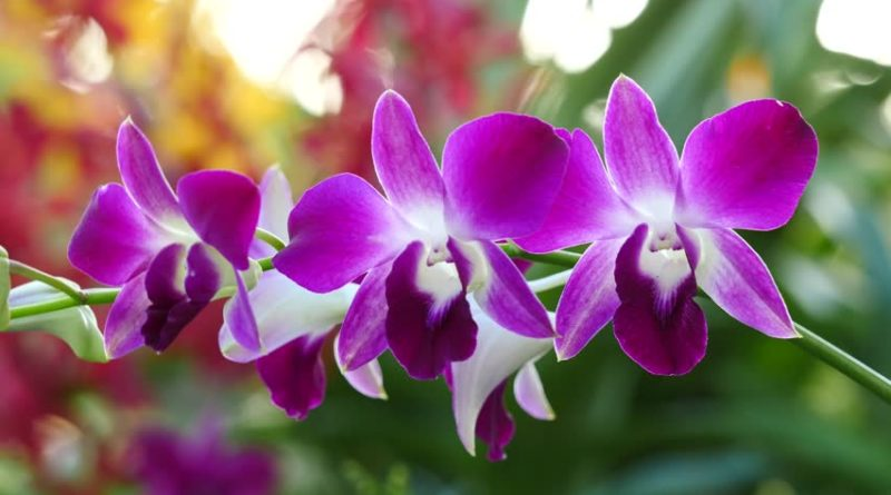 The love of orchids